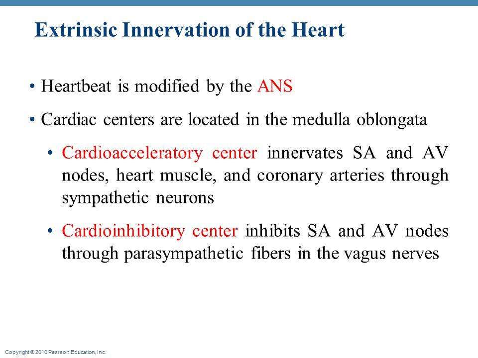 Copyright © 2010 Pearson Education, Inc. Autonomic Inputs to Heart