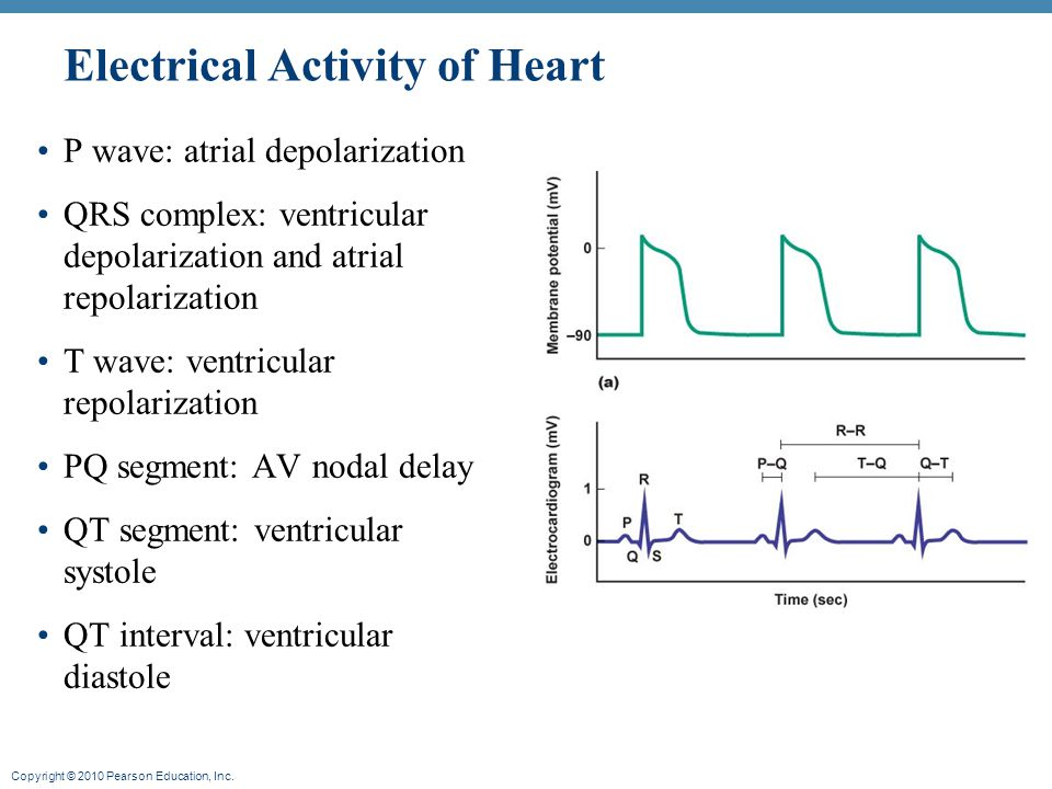 Copyright © 2010 Pearson Education, Inc. Figure 13.16 Electrical Activity of Heart – normal values