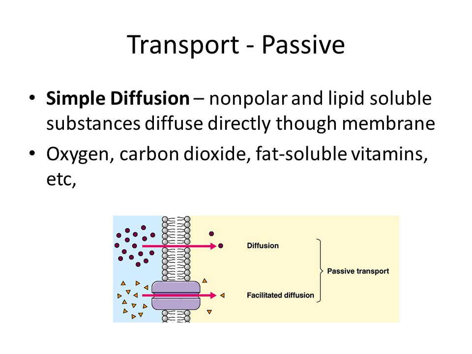 Transport - Passive Simple Diffusion – nonpolar and lipid soluble substances diffuse directly though membrane Oxygen, carbon dioxide, fat-soluble vitamins, etc,