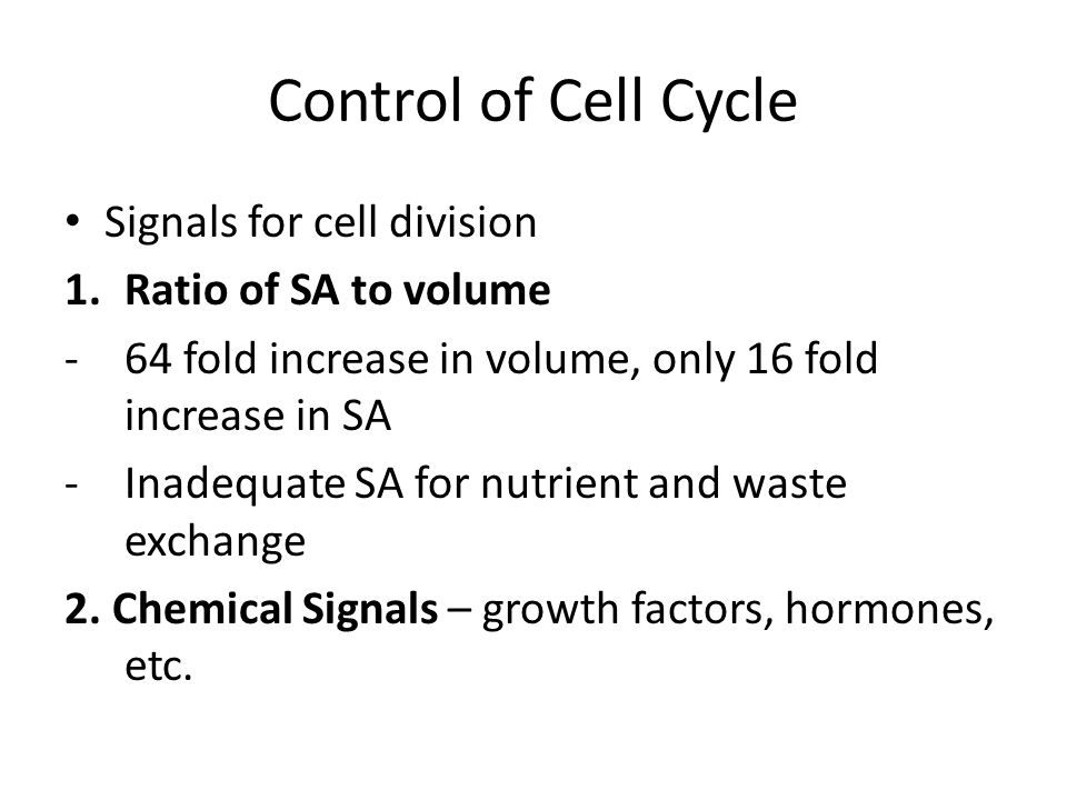 Control of Cell Cycle Signals for cell division 1.Ratio of SA to volume -64 fold increase in volume, only 16 fold increase in SA -Inadequate SA for nutrient and waste exchange 2.