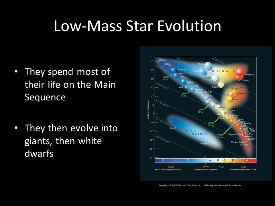 Low-Mass Star Evolution They spend most of their life on the Main Sequence They then evolve into giants, then white dwarfs