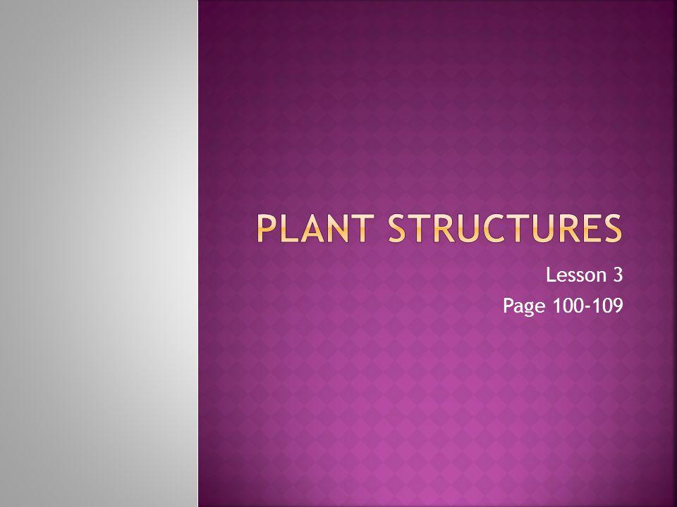 Lesson 3 Page 100-109
