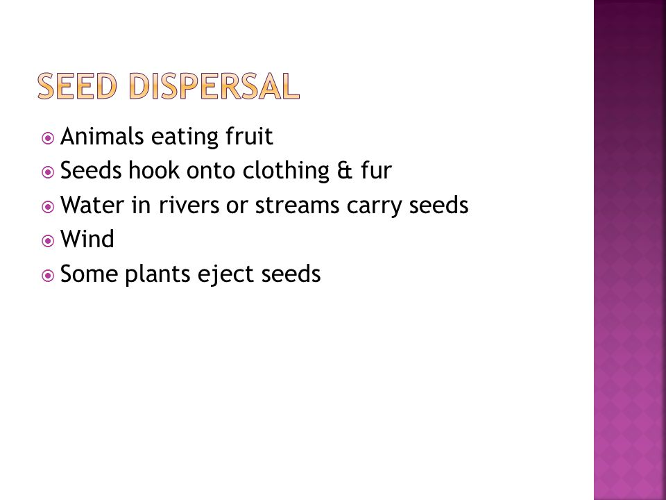  Animals eating fruit  Seeds hook onto clothing & fur  Water in rivers or streams carry seeds  Wind  Some plants eject seeds