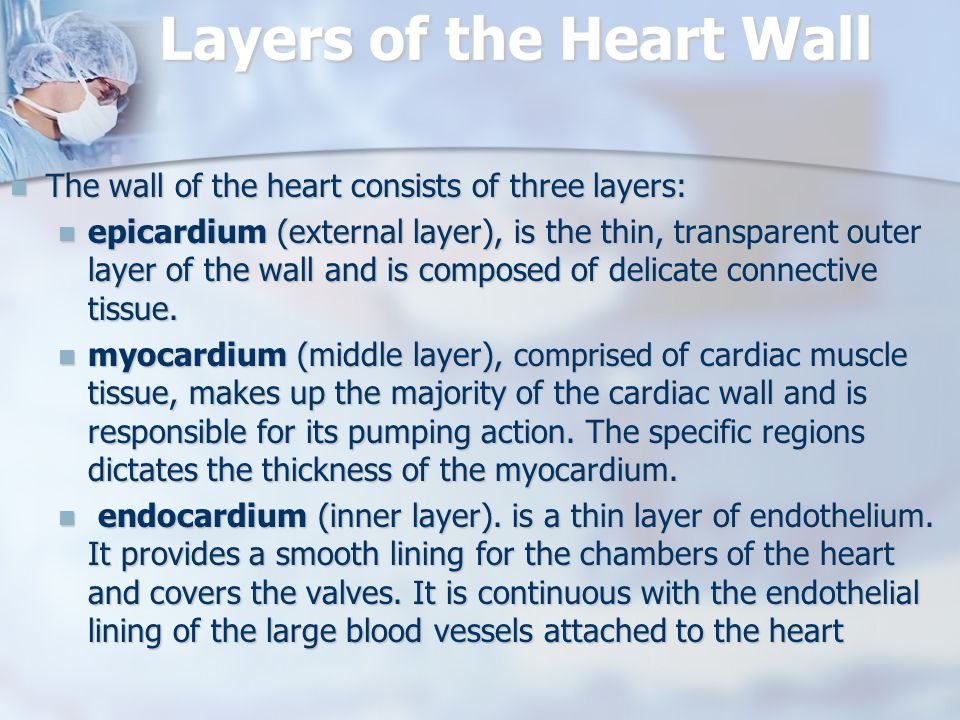 Layers of the Heart Wall The wall of the heart consists of three layers: The wall of the heart consists of three layers: epicardium (external layer), is the thin, transparent outer layer of the wall and is composed of delicate connective tissue.