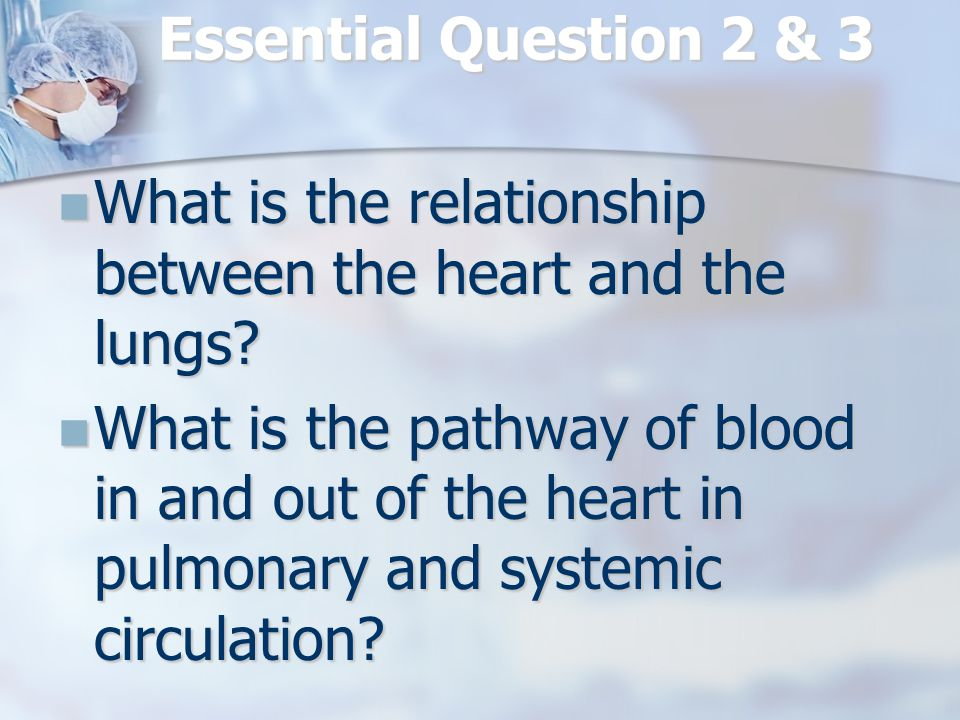 Essential Question 2 & 3 What is the relationship between the heart and the lungs.