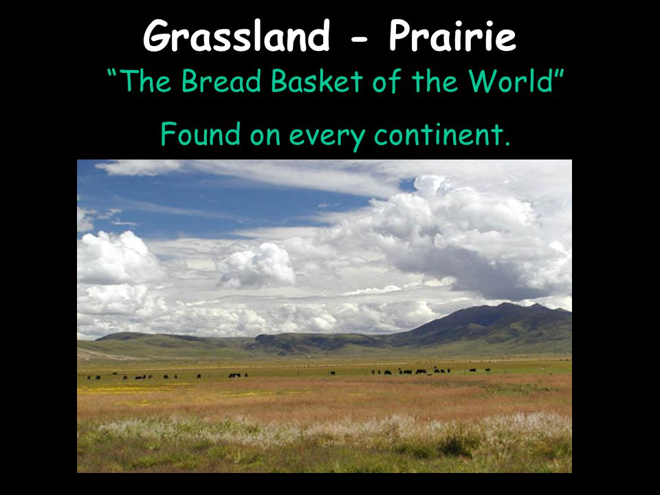 Grassland - Prairie The Bread Basket of the World Found on every continent.