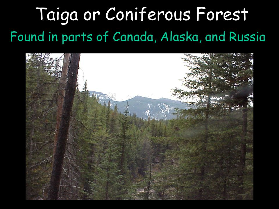 Taiga or Coniferous Forest Found in parts of Canada, Alaska, and Russia