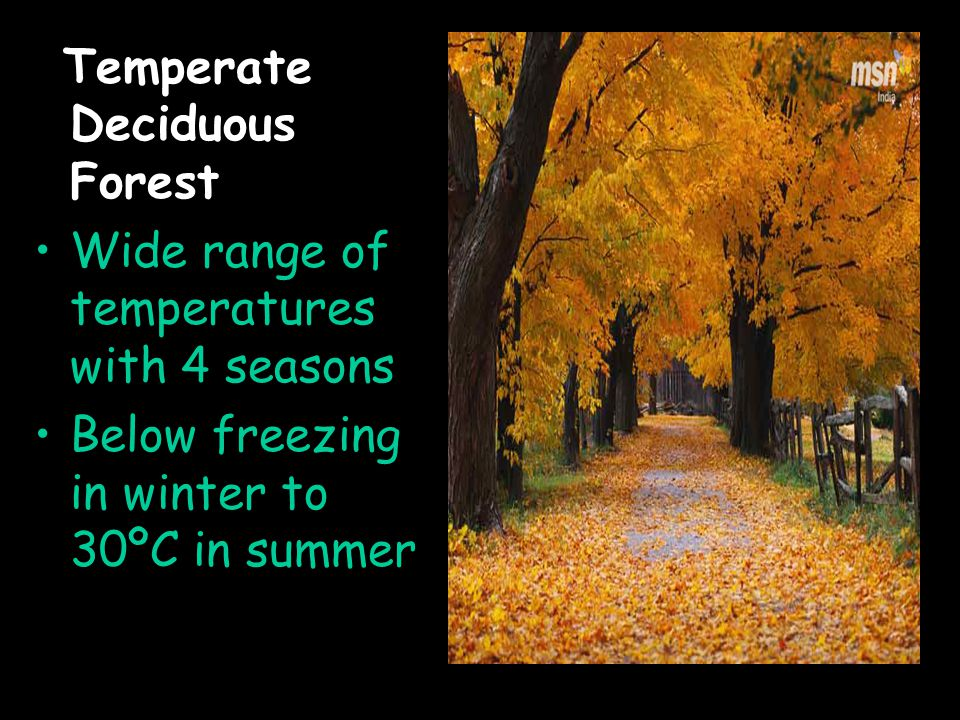 Temperate Deciduous Forest Wide range of temperatures with 4 seasons Below freezing in winter to 30ºC in summer
