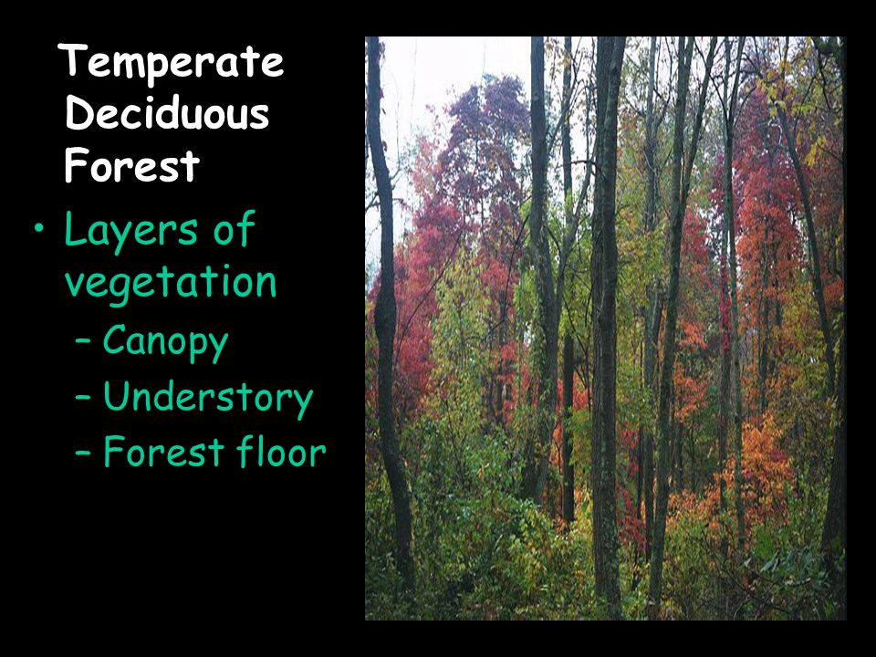 Temperate Deciduous Forest Layers of vegetation –Canopy –Understory –Forest floor