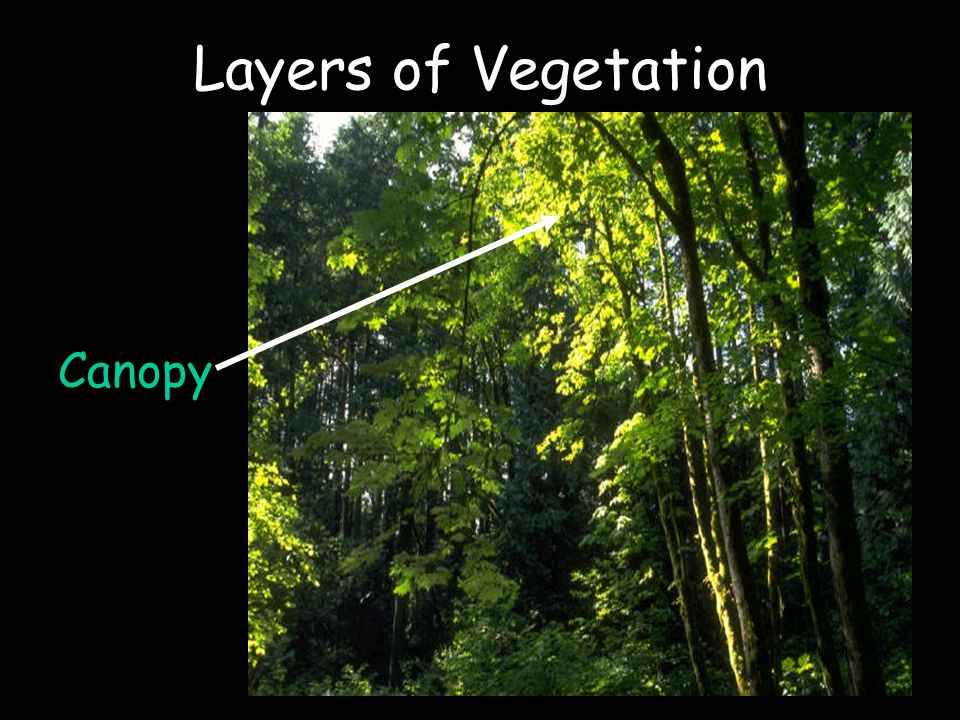 Layers of Vegetation Canopy