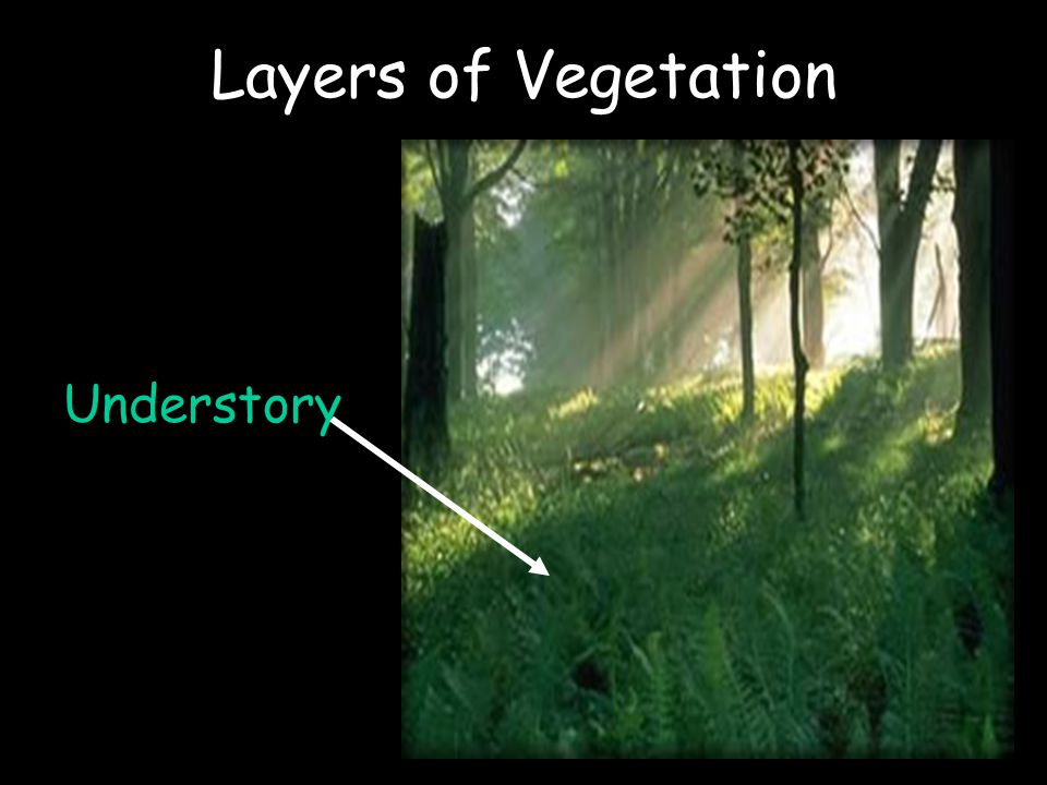 Layers of Vegetation Understory