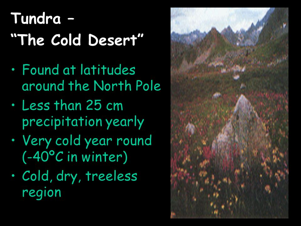 Tundra – The Cold Desert Found at latitudes around the North Pole Less than 25 cm precipitation yearly Very cold year round (-40ºC in winter) Cold, dry, treeless region