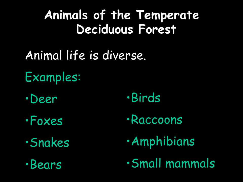 Animals of the Temperate Deciduous Forest Animal life is diverse.
