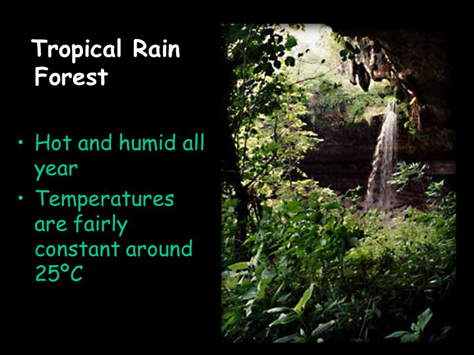 Tropical Rain Forest Hot and humid all year Temperatures are fairly constant around 25ºC