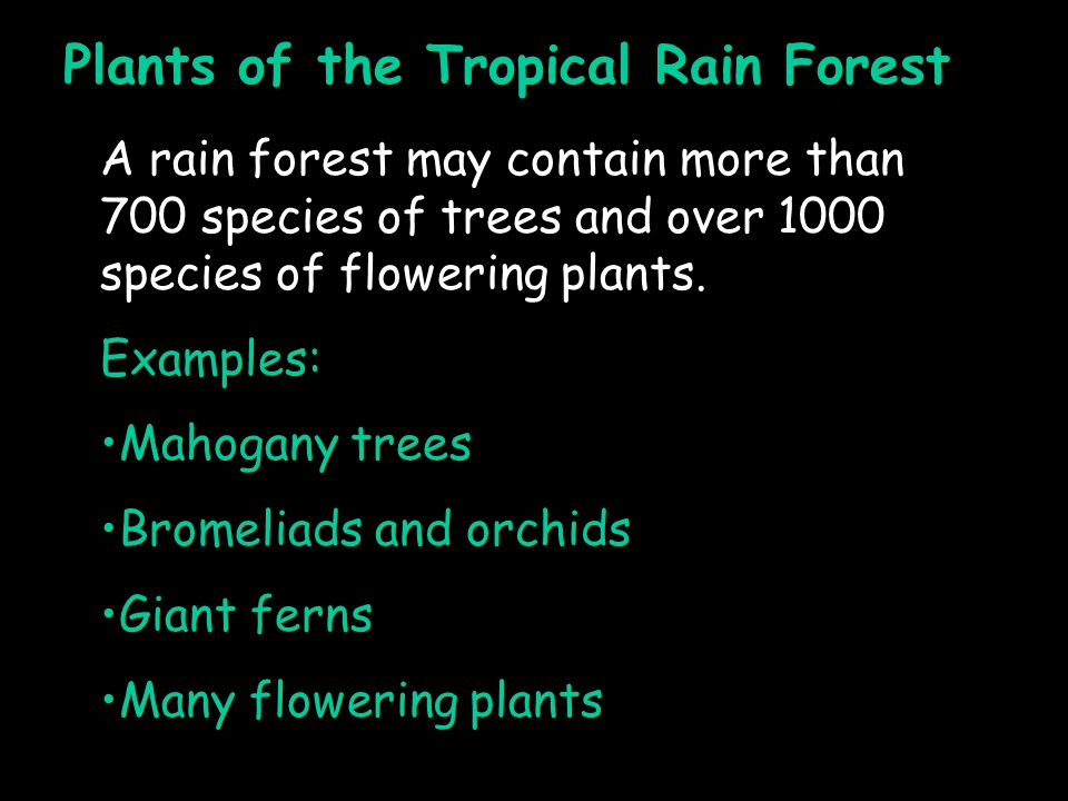 Plants of the Tropical Rain Forest A rain forest may contain more than 700 species of trees and over 1000 species of flowering plants.