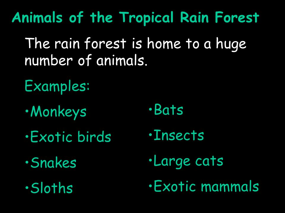 Animals of the Tropical Rain Forest The rain forest is home to a huge number of animals.