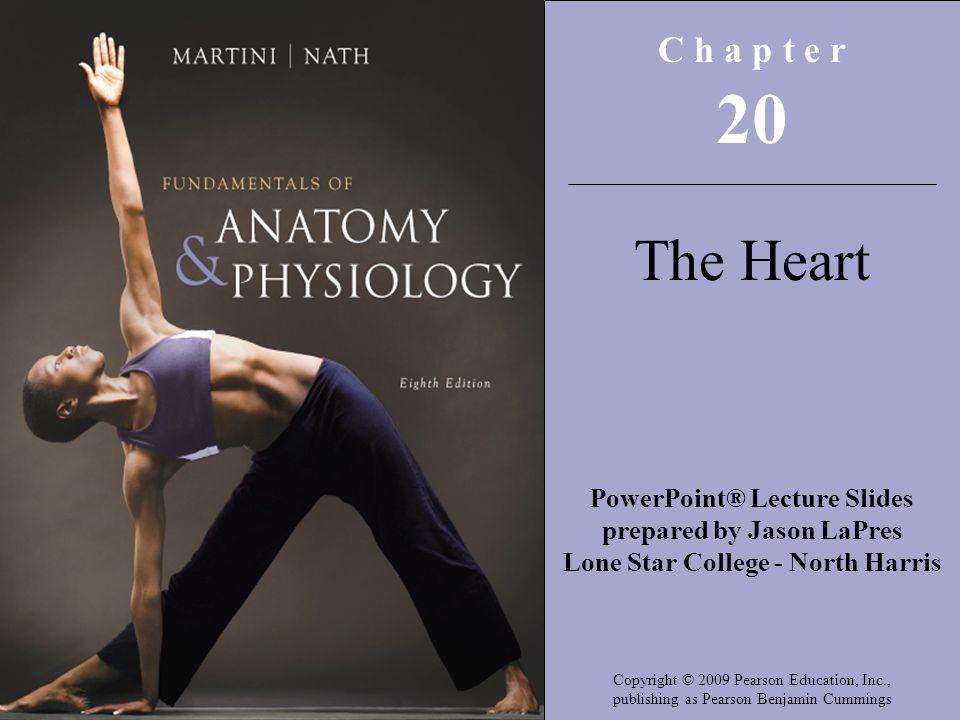 Copyright © 2009 Pearson Education, Inc., publishing as Pearson Benjamin Cummings The Conducting System Figure 20–13 Impulse Conduction through the Heart