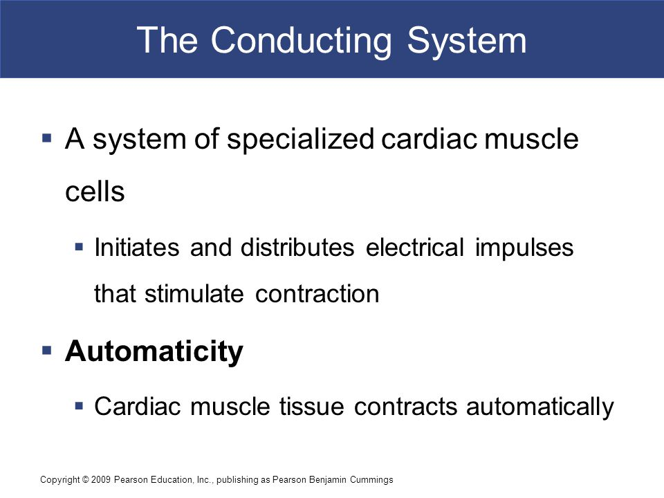Copyright © 2009 Pearson Education, Inc., publishing as Pearson Benjamin Cummings The Conducting System  Structures of the Conducting System  Sinoatrial (SA) node - wall of right atrium  Atrioventricular (AV) node - junction between atria and ventricles  Conducting cells - throughout myocardium