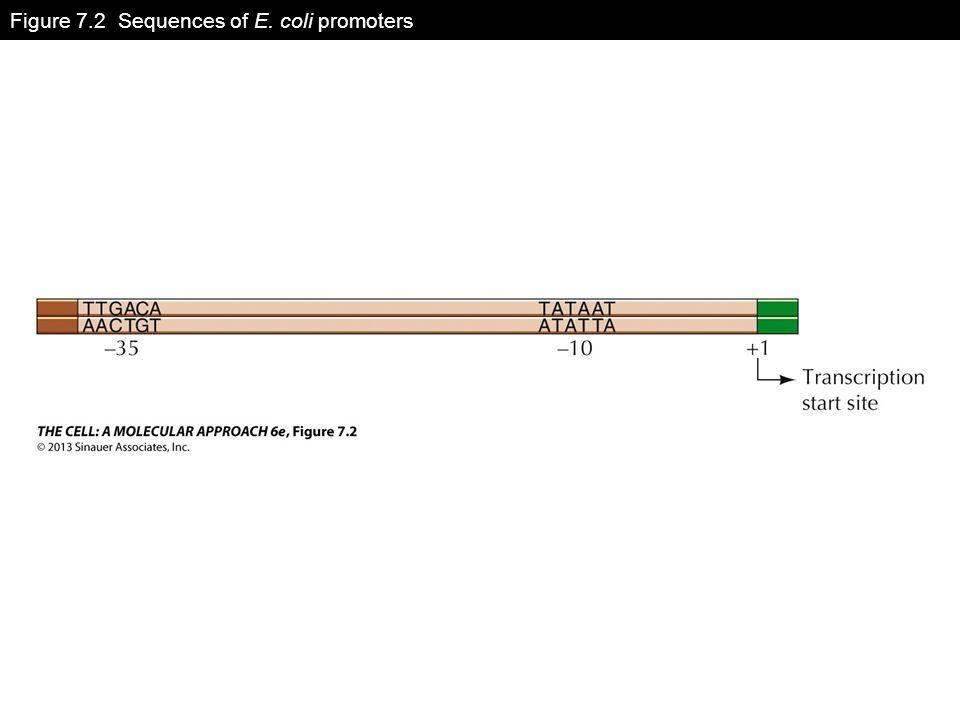 Figure 7.2 Sequences of E. coli promoters