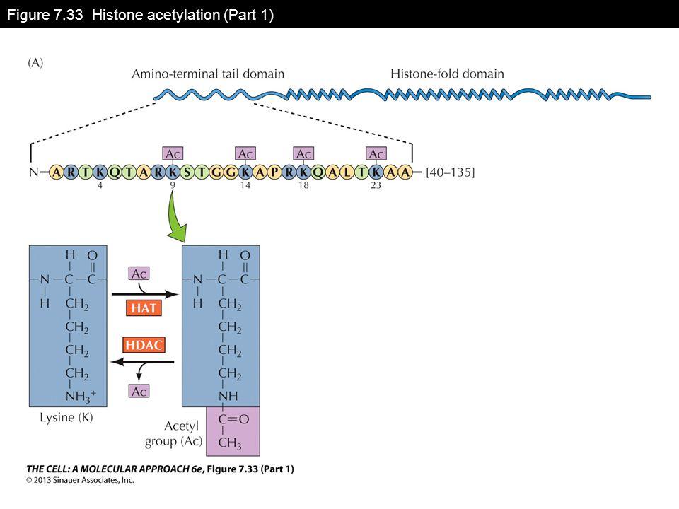 Figure 7.33 Histone acetylation (Part 1)