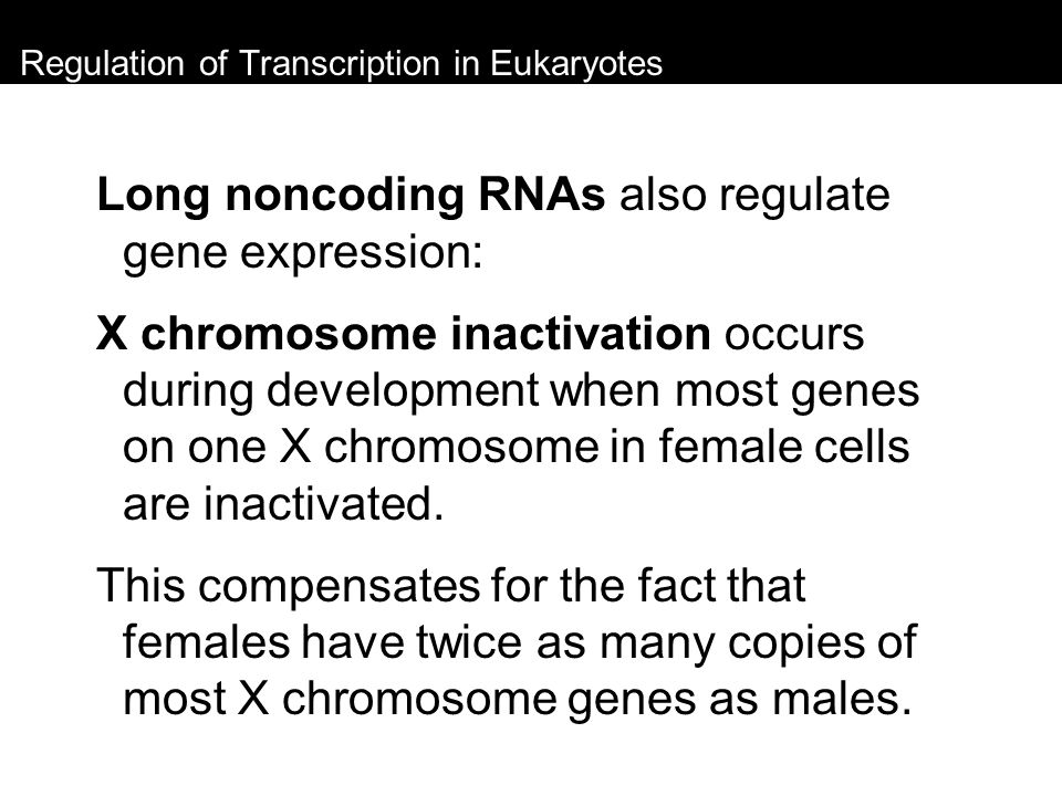 Regulation of Transcription in Eukaryotes Long noncoding RNAs also regulate gene expression: X chromosome inactivation occurs during development when