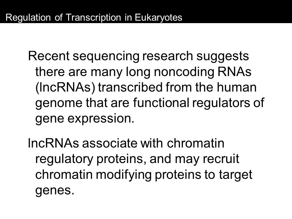 Regulation of Transcription in Eukaryotes Recent sequencing research suggests there are many long noncoding RNAs (lncRNAs) transcribed from the human