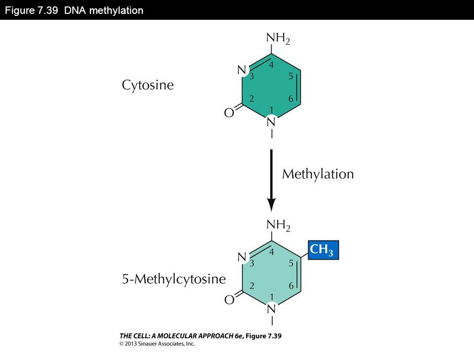 Figure 7.39 DNA methylation
