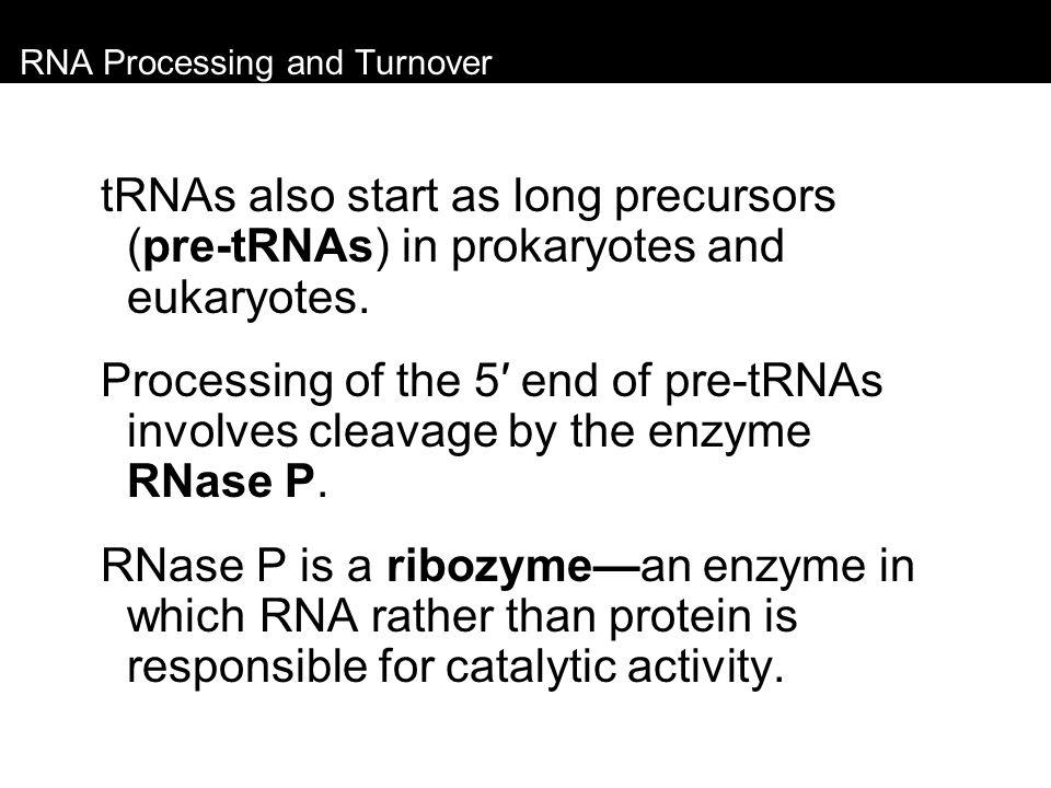 RNA Processing and Turnover tRNAs also start as long precursors (pre-tRNAs) in prokaryotes and eukaryotes. Processing of the 5′ end of pre-tRNAs invol