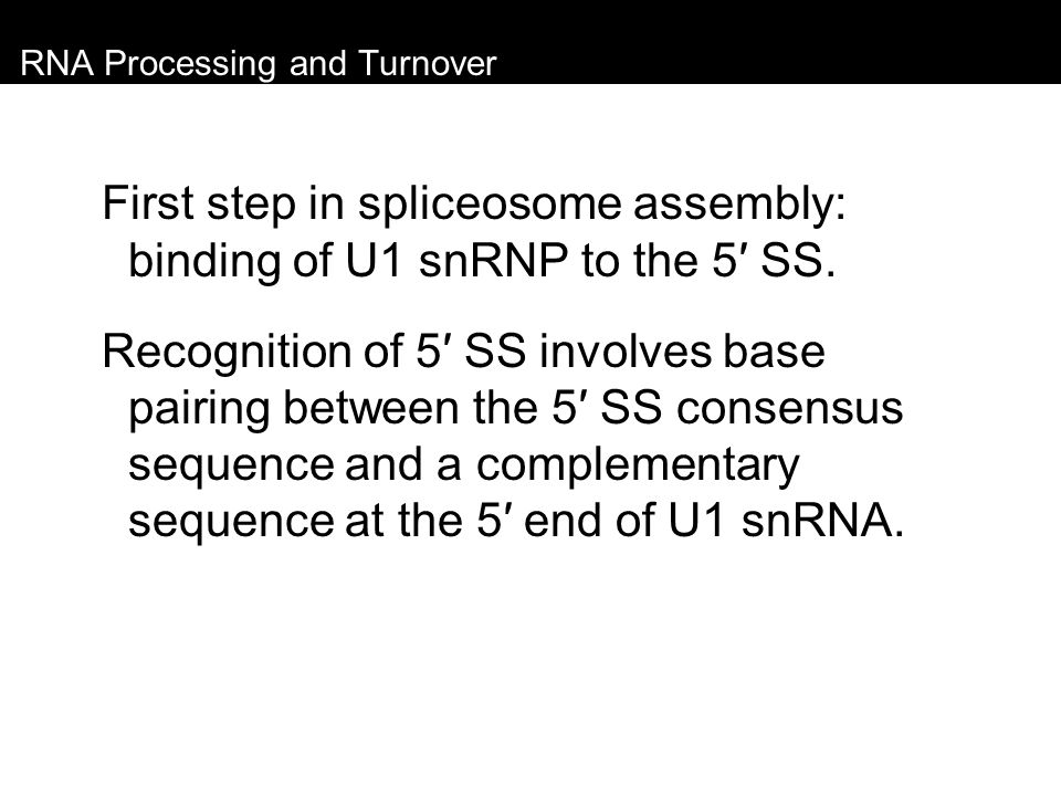 RNA Processing and Turnover First step in spliceosome assembly: binding of U1 snRNP to the 5′ SS. Recognition of 5′ SS involves base pairing between t