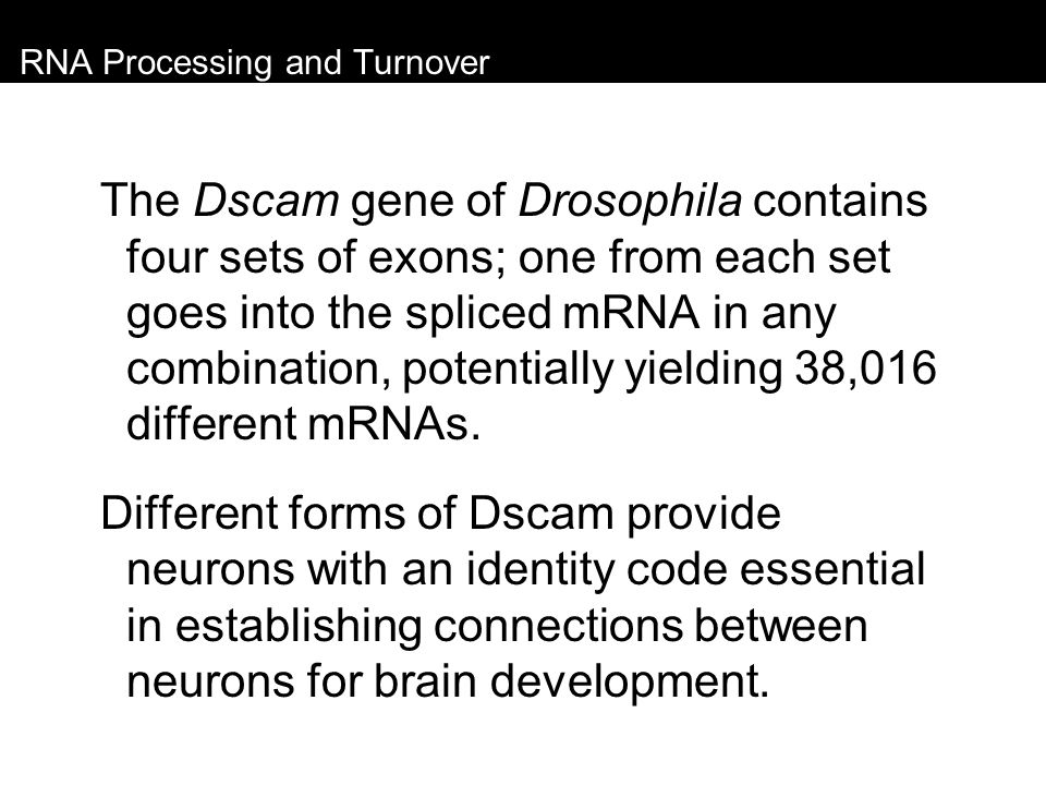 RNA Processing and Turnover The Dscam gene of Drosophila contains four sets of exons; one from each set goes into the spliced mRNA in any combination,