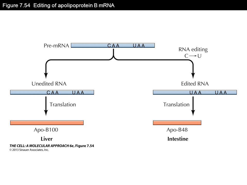 Figure 7.54 Editing of apolipoprotein B mRNA