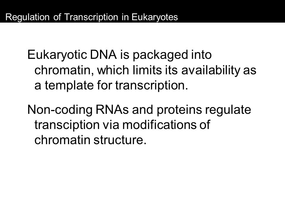 Regulation of Transcription in Eukaryotes Eukaryotic DNA is packaged into chromatin, which limits its availability as a template for transcription. No