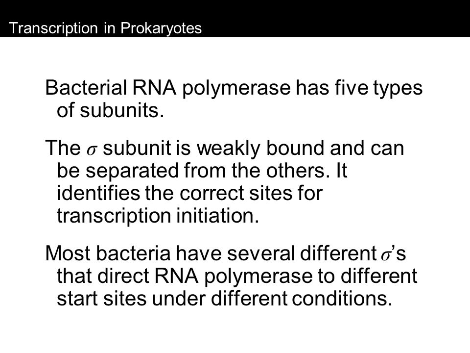 Transcription in Prokaryotes Negative control: the regulatory protein (the repressor) blocks transcription.
