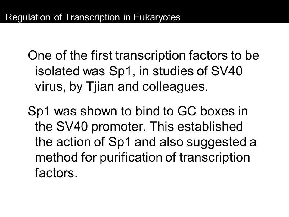Regulation of Transcription in Eukaryotes One of the first transcription factors to be isolated was Sp1, in studies of SV40 virus, by Tjian and collea
