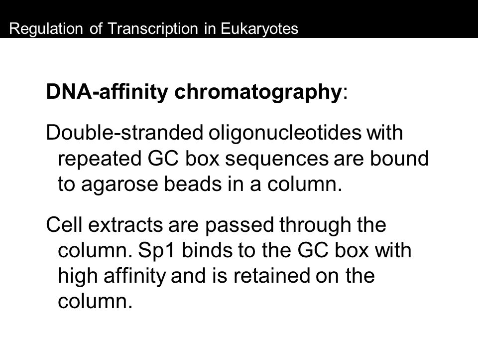Regulation of Transcription in Eukaryotes DNA-affinity chromatography: Double-stranded oligonucleotides with repeated GC box sequences are bound to ag