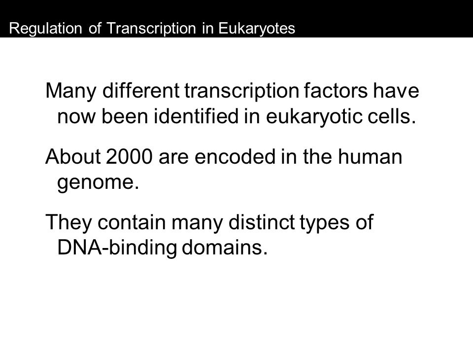 Regulation of Transcription in Eukaryotes Many different transcription factors have now been identified in eukaryotic cells. About 2000 are encoded in