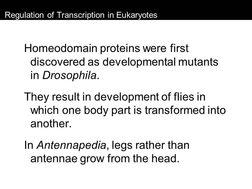 Regulation of Transcription in Eukaryotes Homeodomain proteins were first discovered as developmental mutants in Drosophila. They result in developmen
