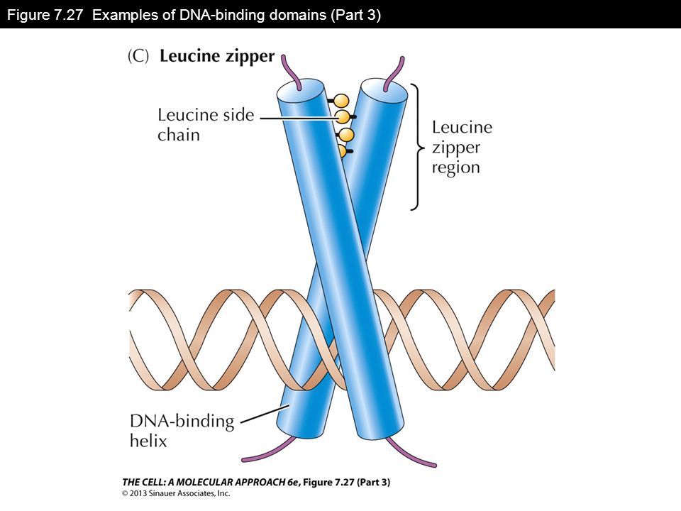 Figure 7.27 Examples of DNA-binding domains (Part 3)