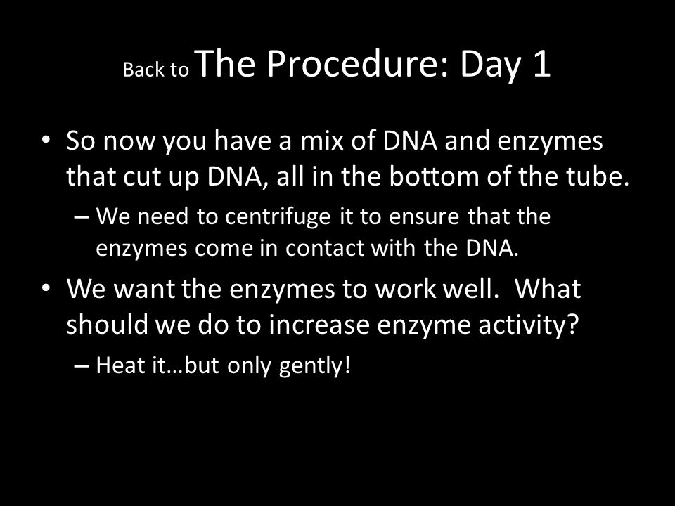 Back to The Procedure: Day 1 So now you have a mix of DNA and enzymes that cut up DNA, all in the bottom of the tube.