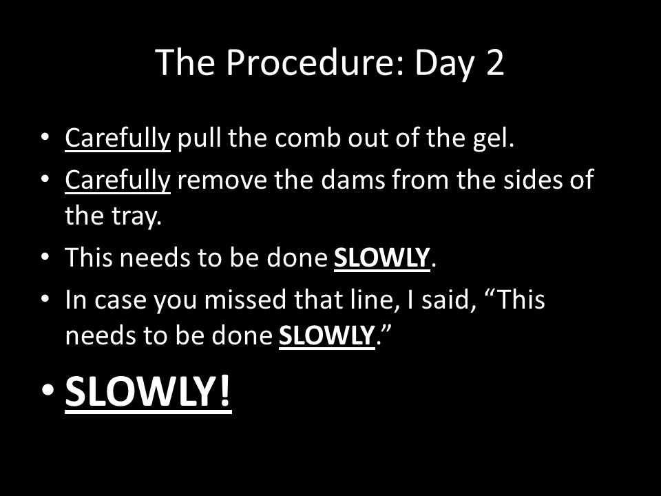 The Procedure: Day 2 Carefully pull the comb out of the gel.