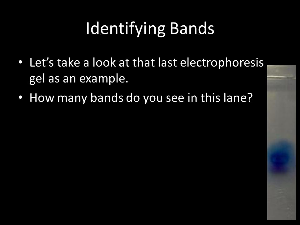 Identifying Bands Let's take a look at that last electrophoresis gel as an example.