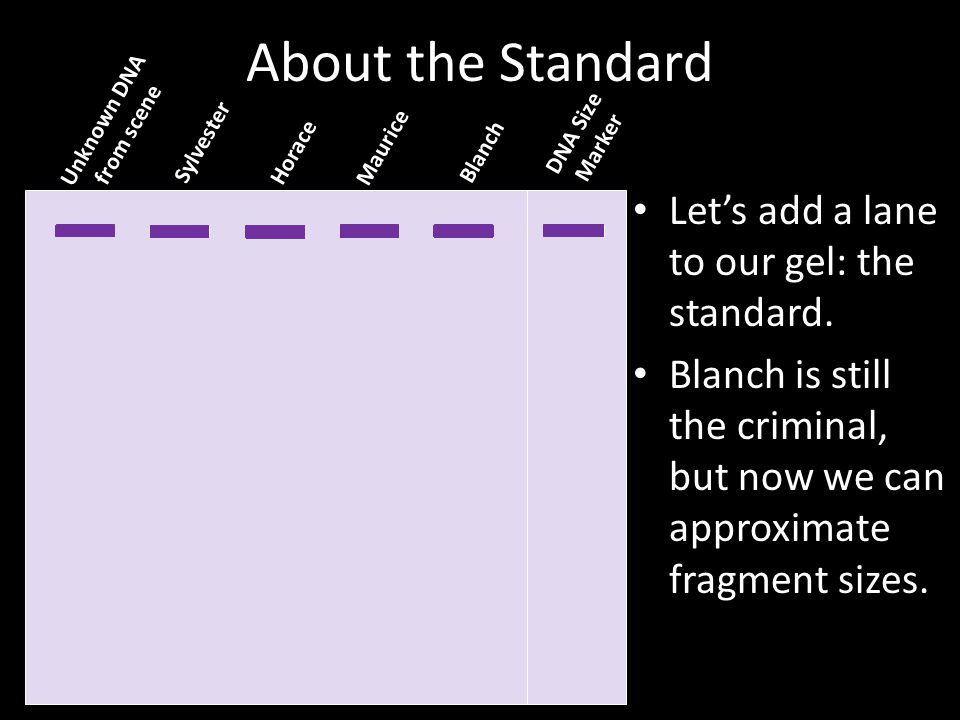 About the Standard Let's add a lane to our gel: the standard.