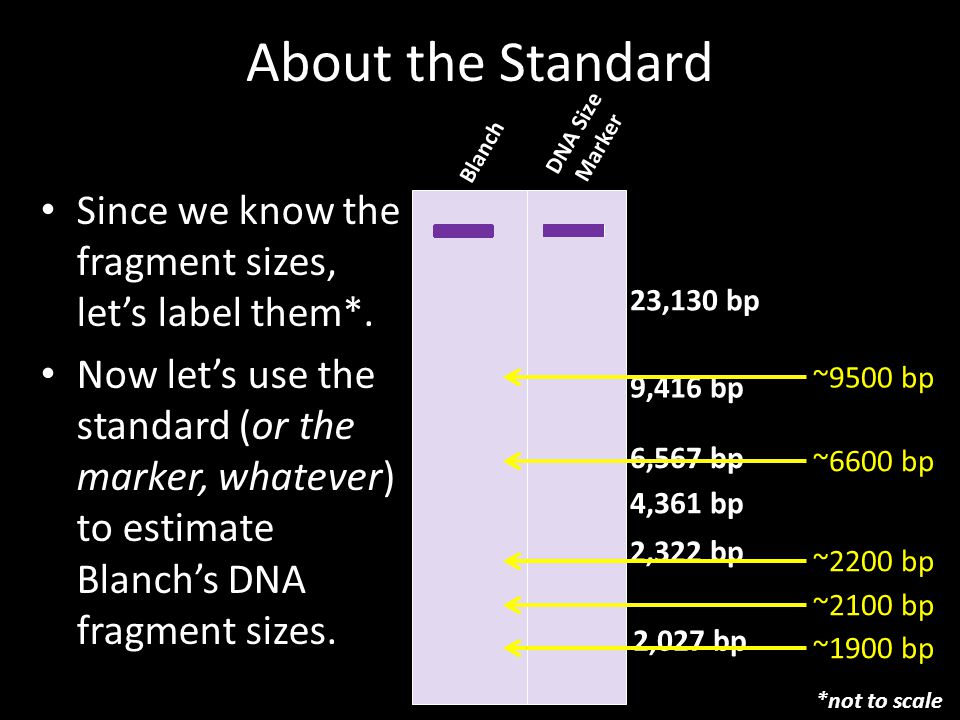 About the Standard Since we know the fragment sizes, let's label them*.