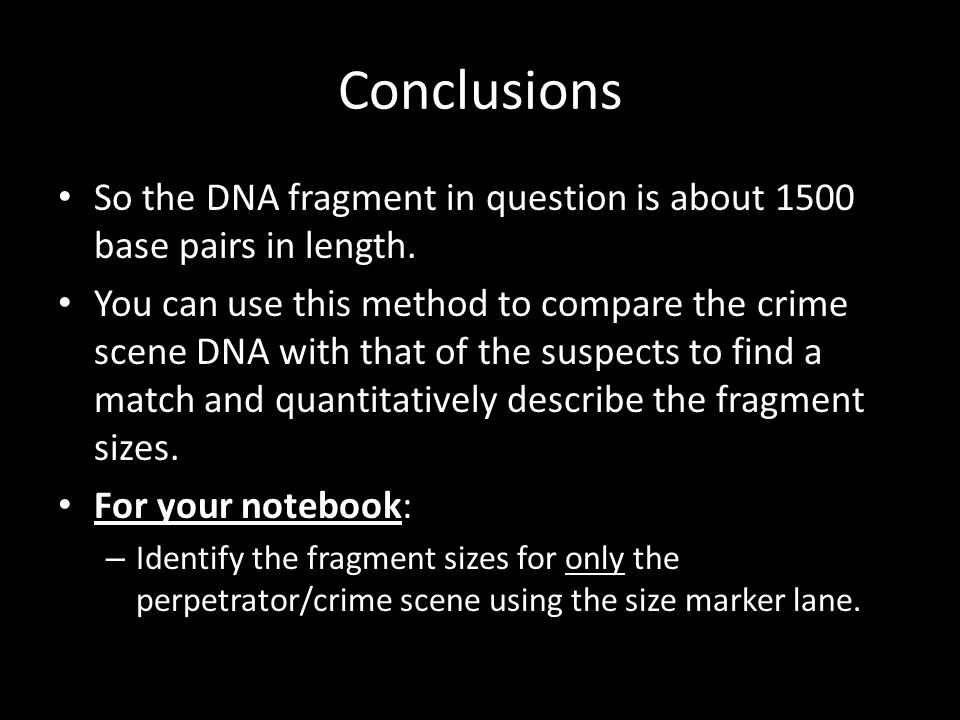 Conclusions So the DNA fragment in question is about 1500 base pairs in length.