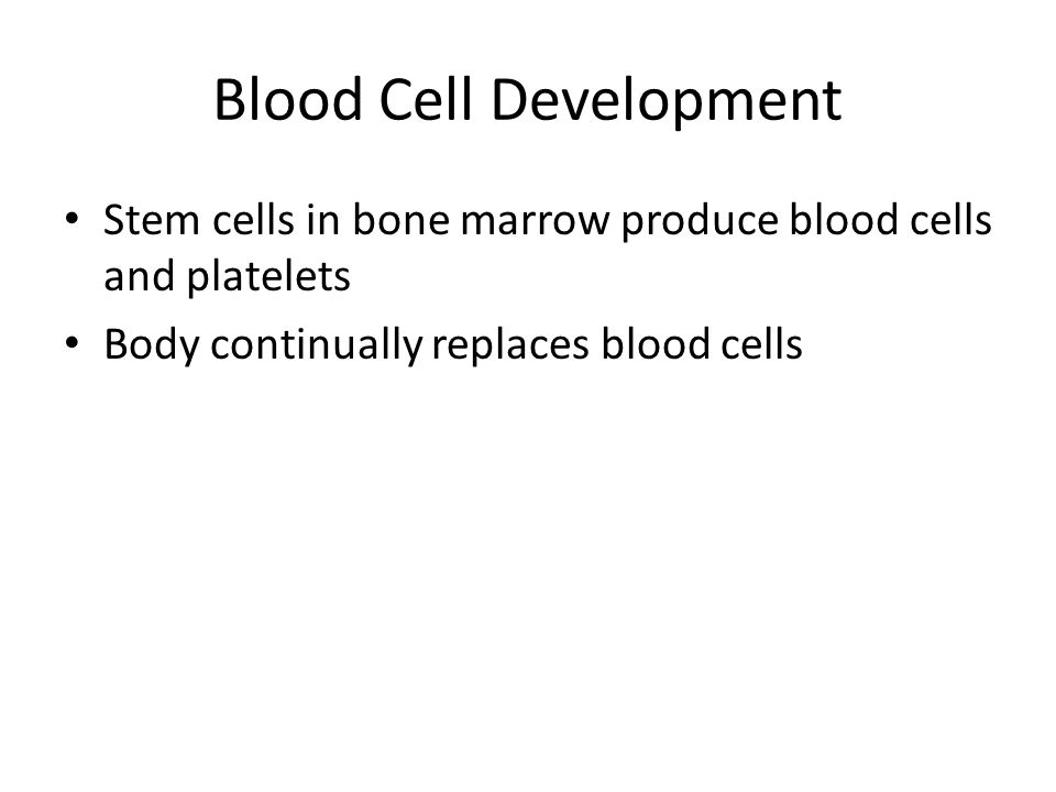 Blood Cell Development Stem cells in bone marrow produce blood cells and platelets Body continually replaces blood cells