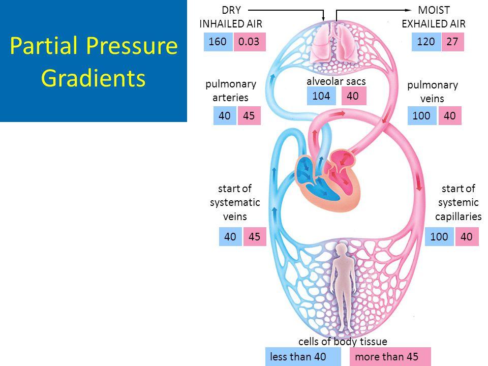 alveolar sacs cells of body tissue DRY INHAILED AIR 1600.03 MOIST EXHAILED AIR 12027 pulmonary veins 10040 10440 pulmonary arteries 4045 start of syst