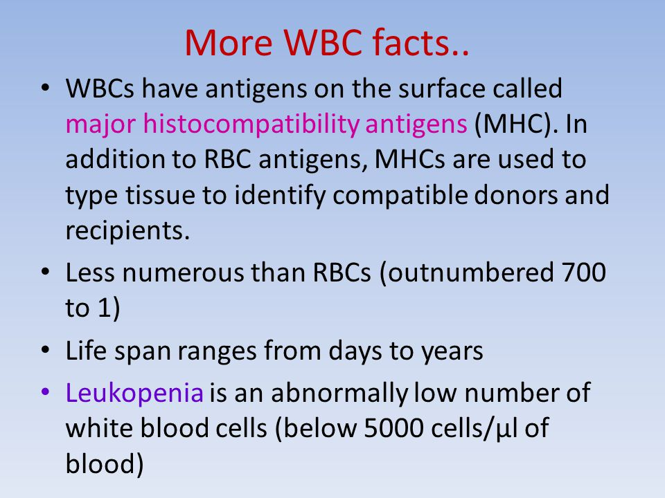 More WBC facts.. WBCs have antigens on the surface called major histocompatibility antigens (MHC).