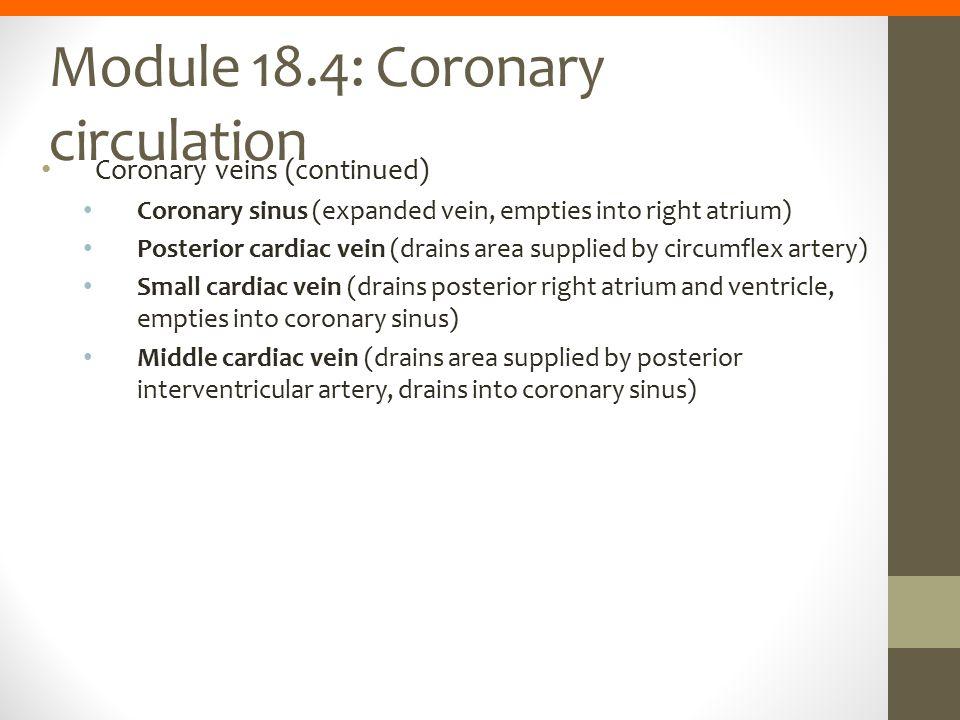 Module 18.4: Coronary circulation Coronary veins (continued) Coronary sinus (expanded vein, empties into right atrium) Posterior cardiac vein (drains