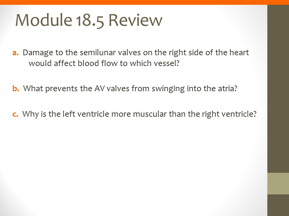 Module 18.5 Review a. Damage to the semilunar valves on the right side of the heart would affect blood flow to which vessel? b. What prevents the AV v