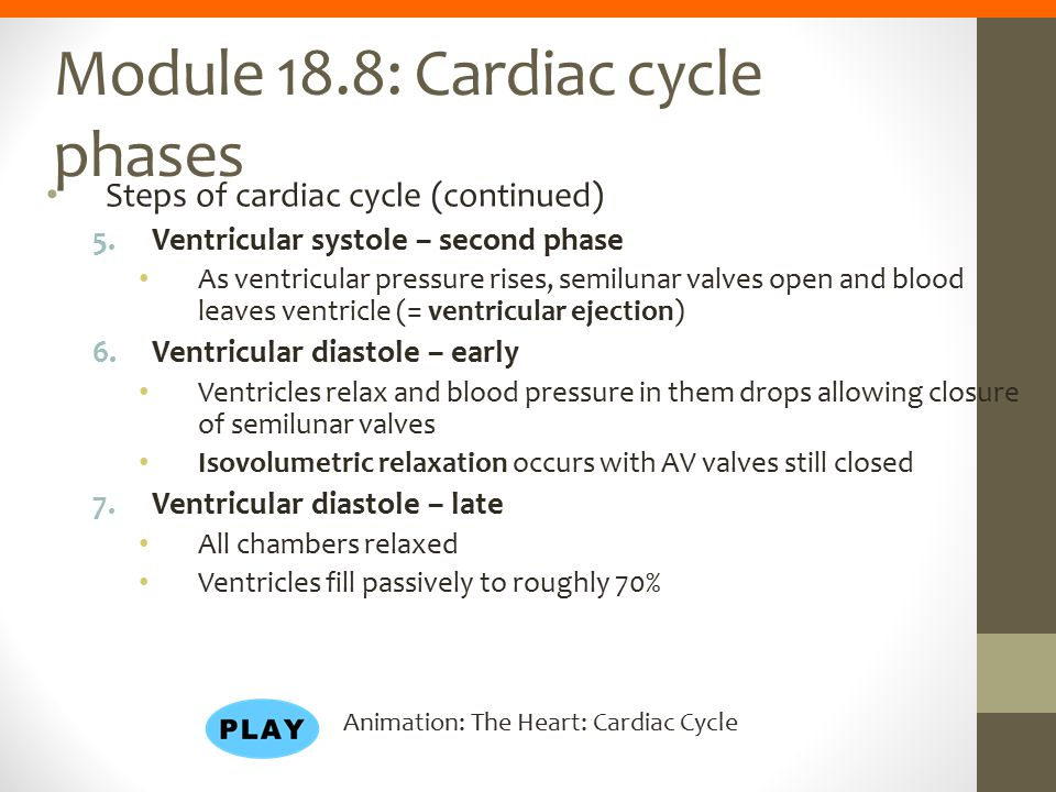 Module 18.8: Cardiac cycle phases Steps of cardiac cycle (continued) 5.Ventricular systole – second phase As ventricular pressure rises, semilunar val